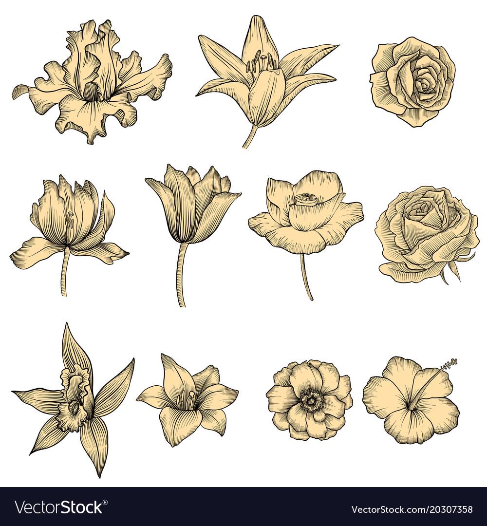 Flowers vintage floral set