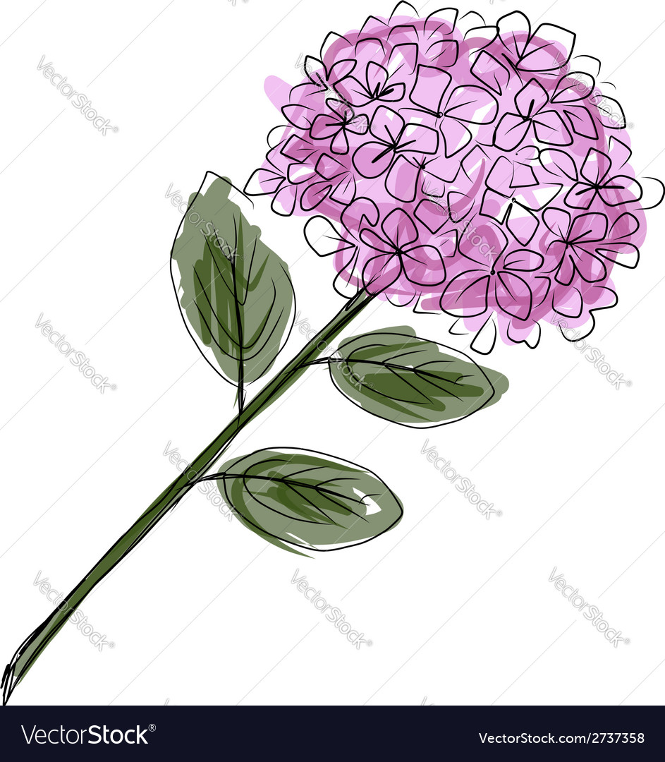 Sketch Of Hydrangea Flower For Your Design Vector Image