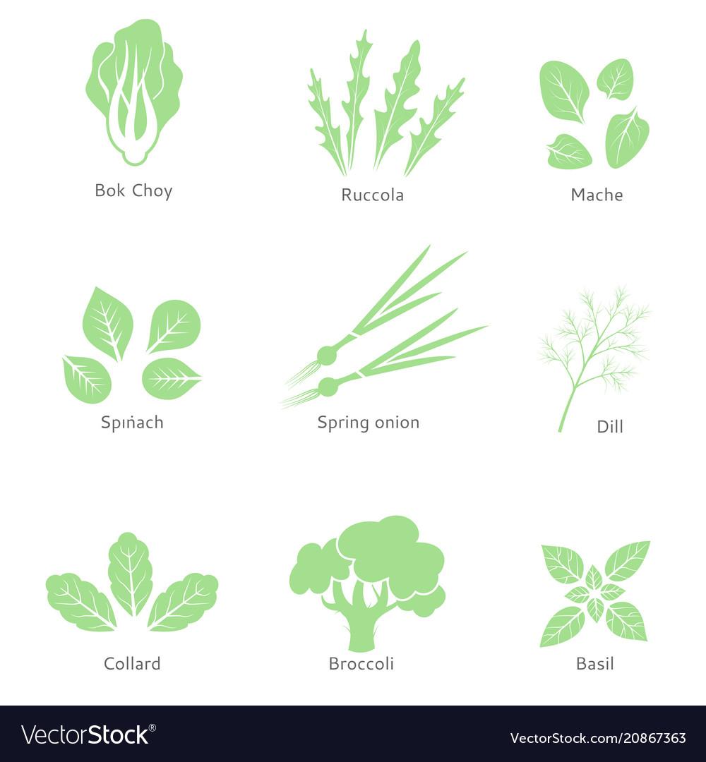 Eco organic bio logos or signs salad bar