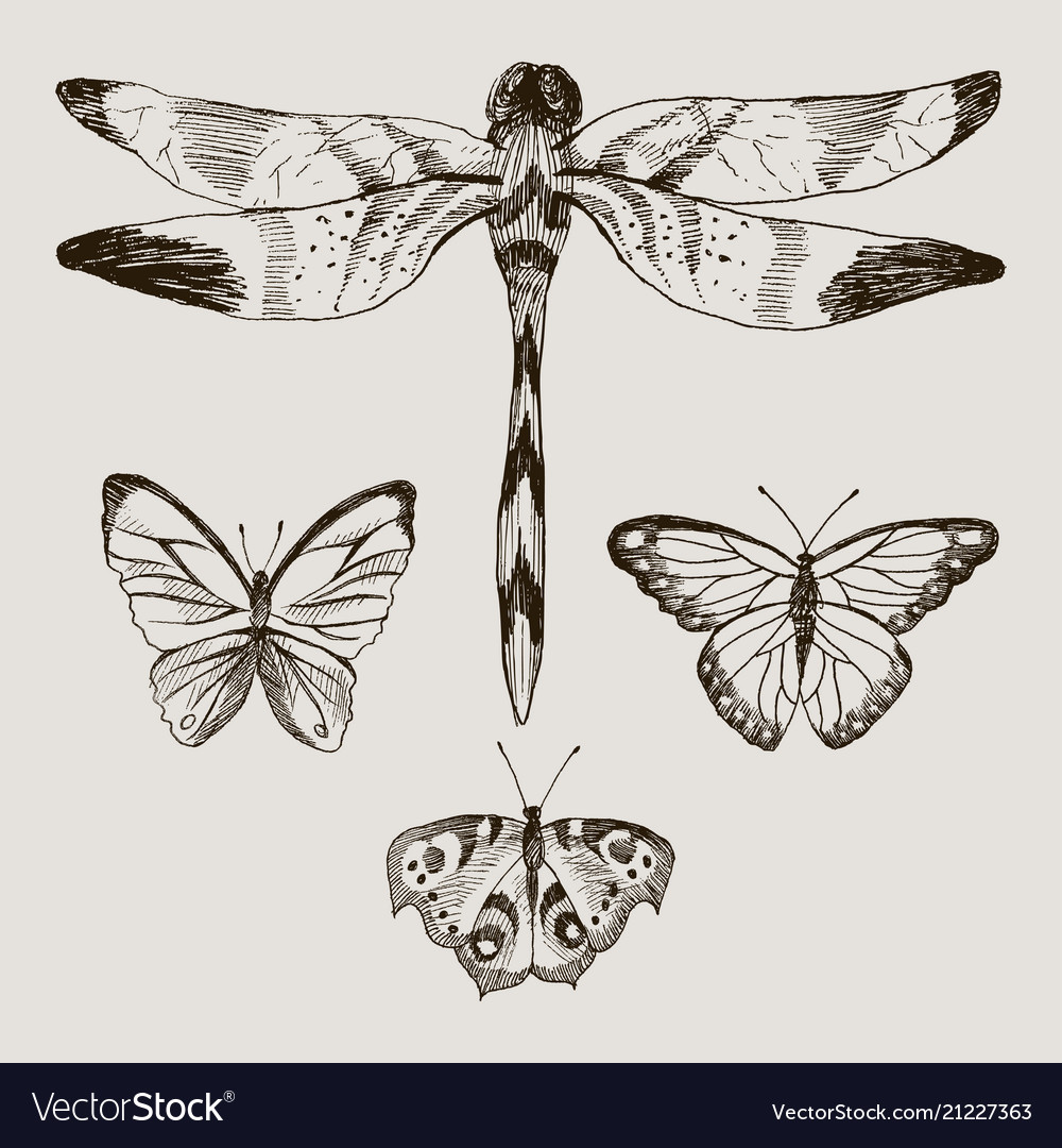 Set of butterflies and dragonfly in the