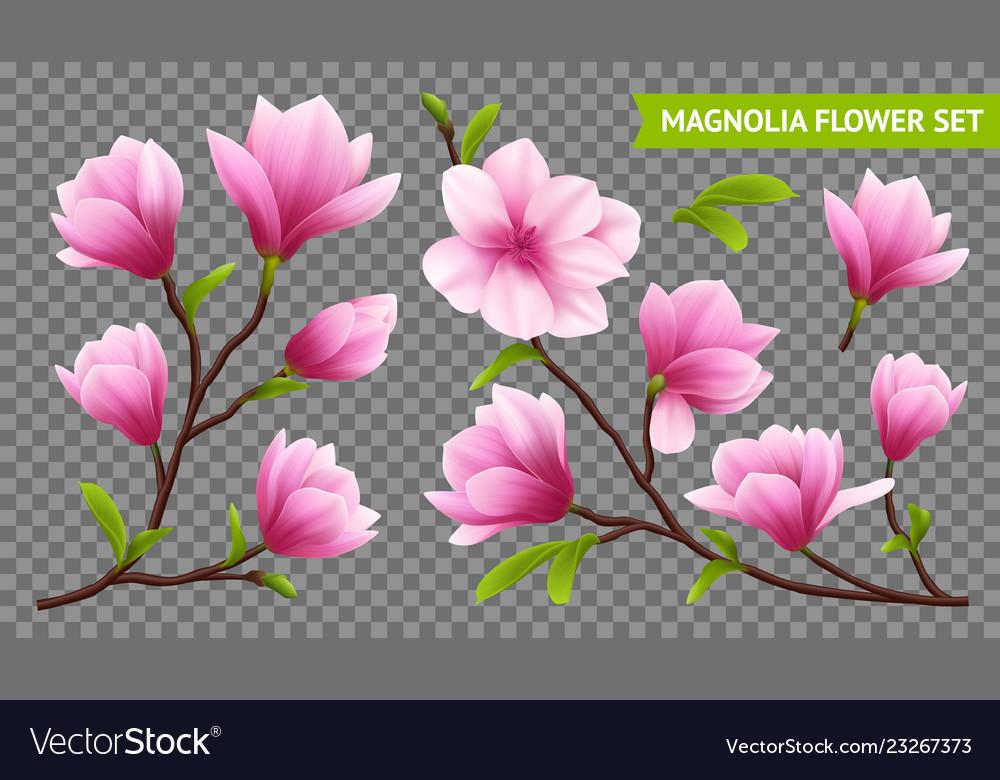 Realistic magnolia flower transparent icon set