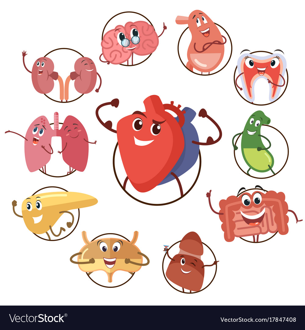 Funny medical icons organs heart lungs