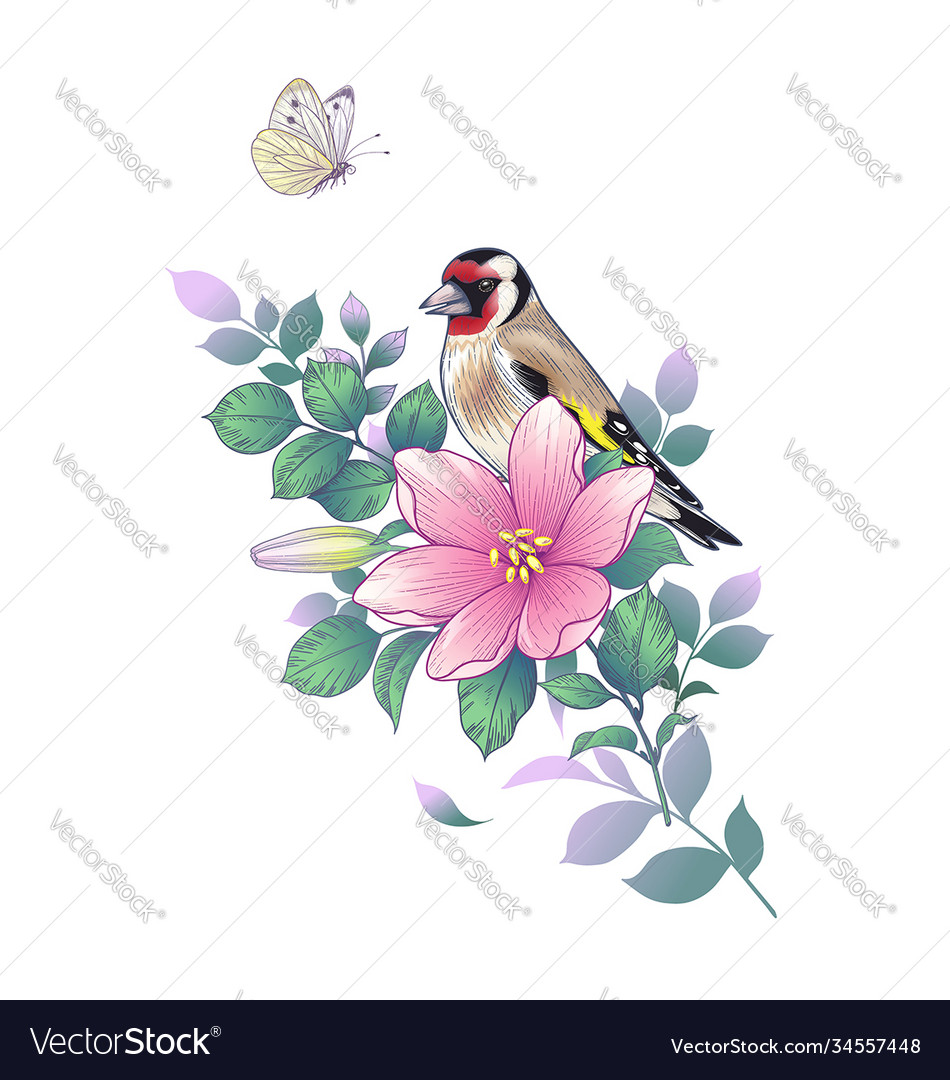 Hand drawn goldfinch sitting on pink flower vector