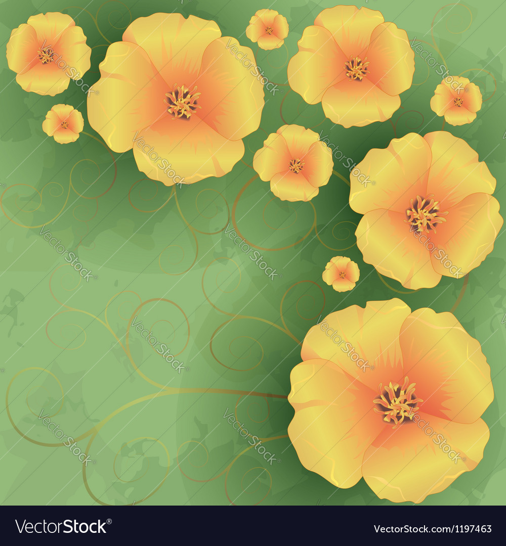 Vintage floral background with flowers poppies vector image