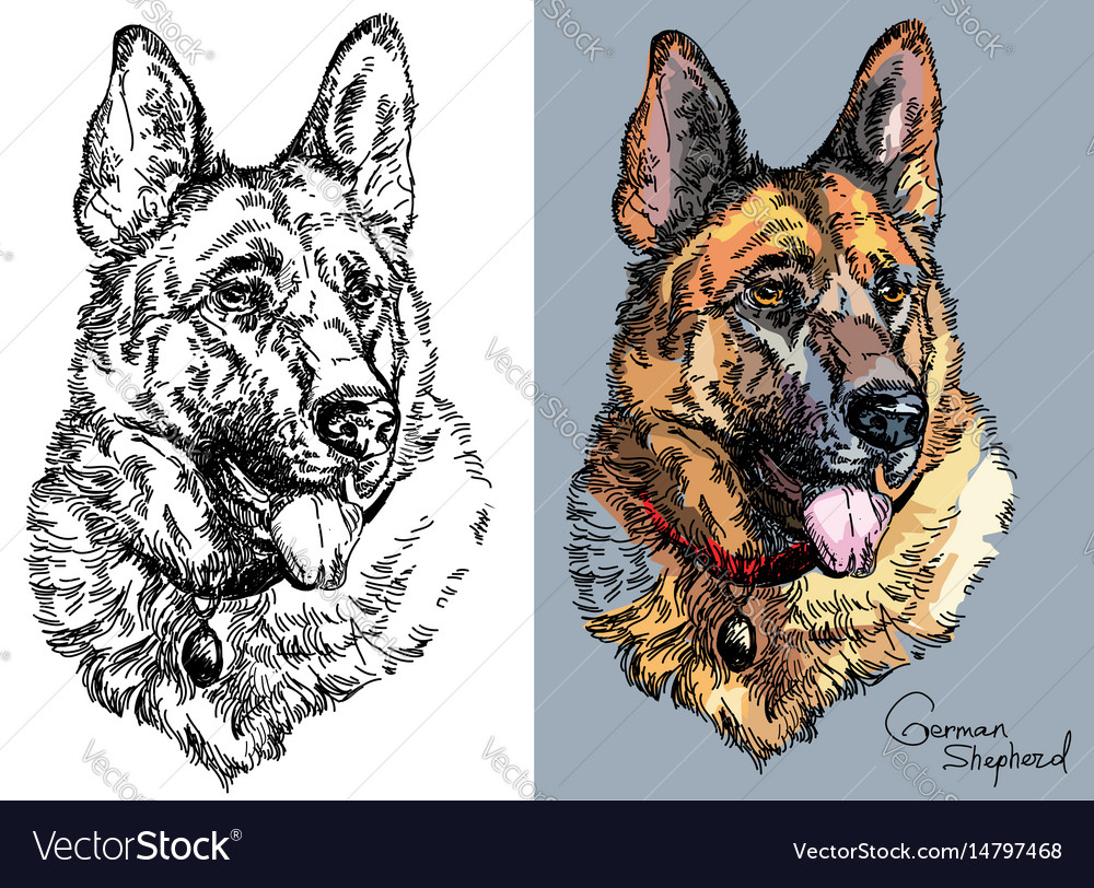 German shepherd in color and black and white vector image