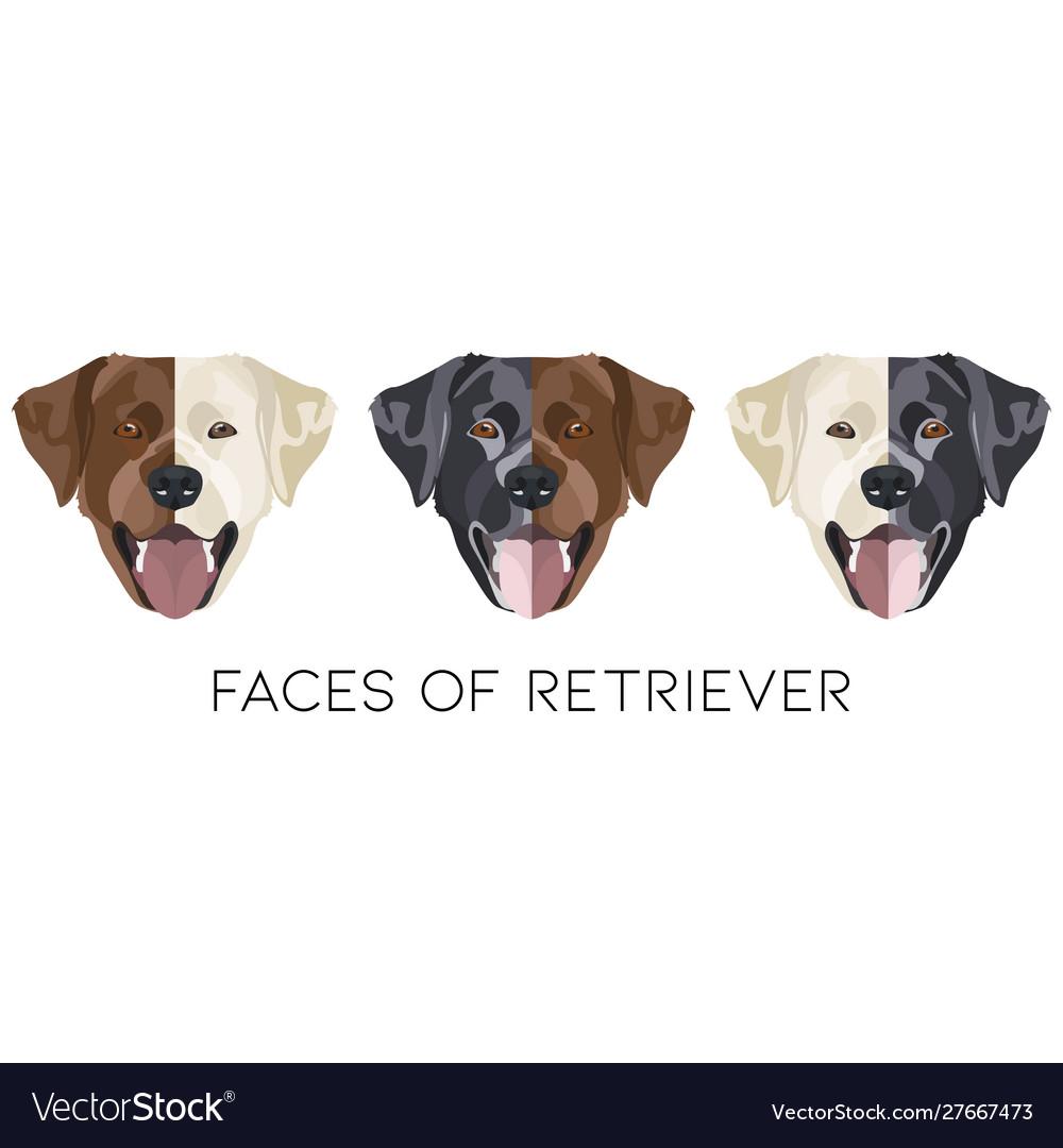 Faces labrador retriever