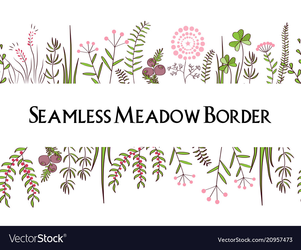 Meadow herbs seamless borders background for