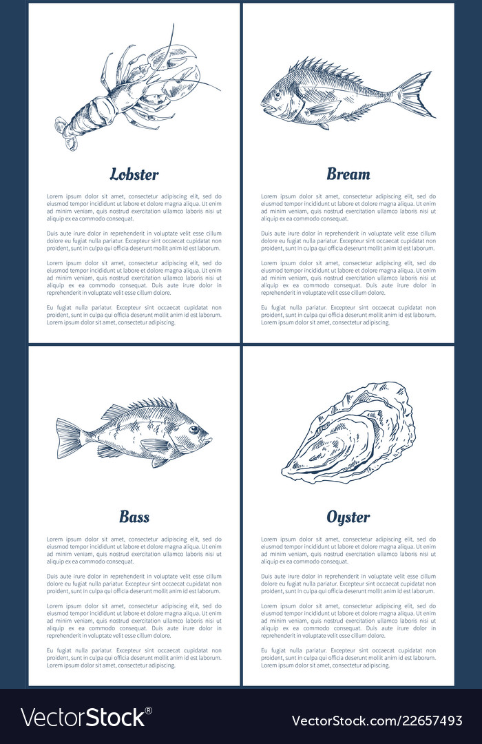 lobster and bream bass set vector image