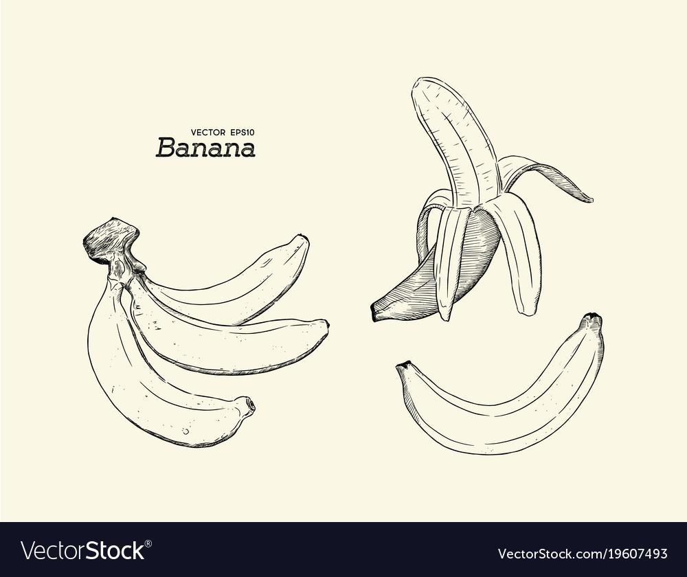 Set Of Banana Hand Draw Sketch Vector Image