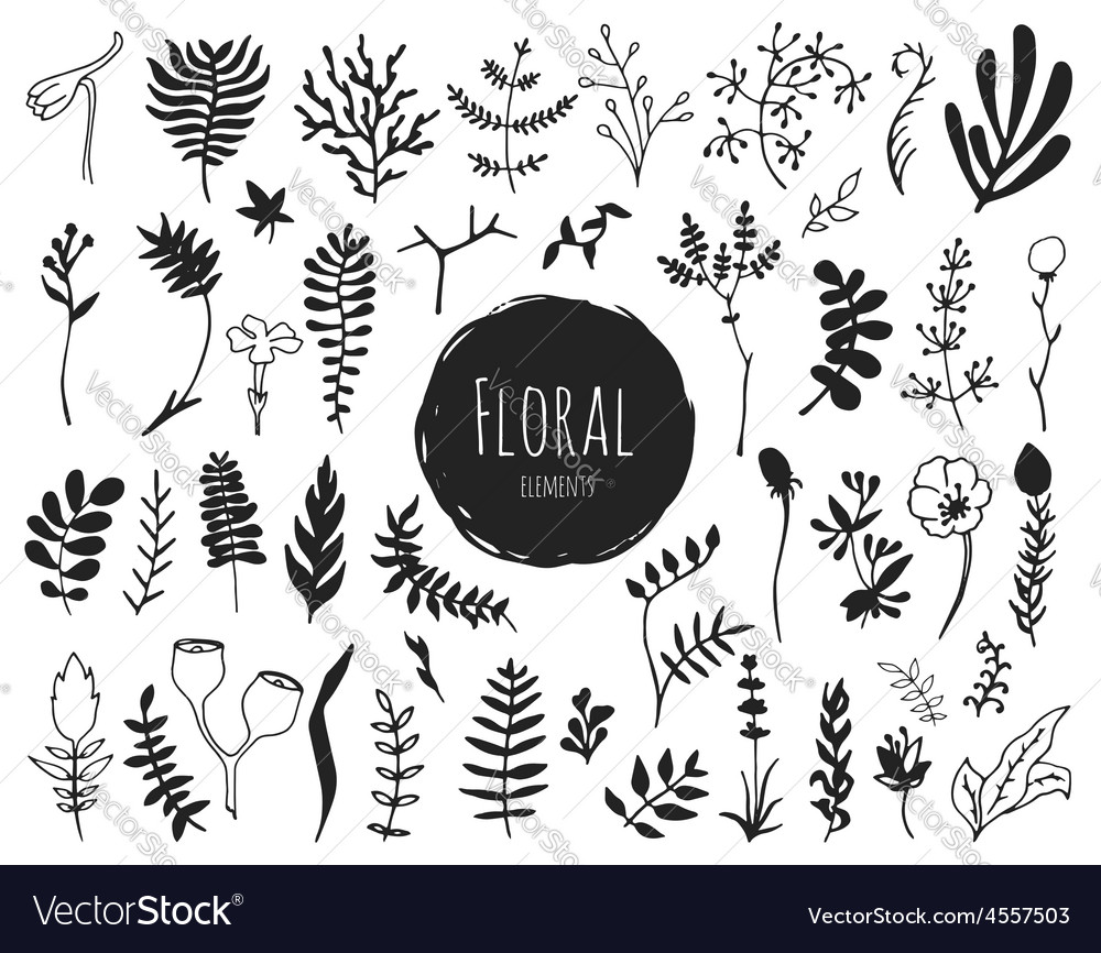 Collection of hand drawn floral elements