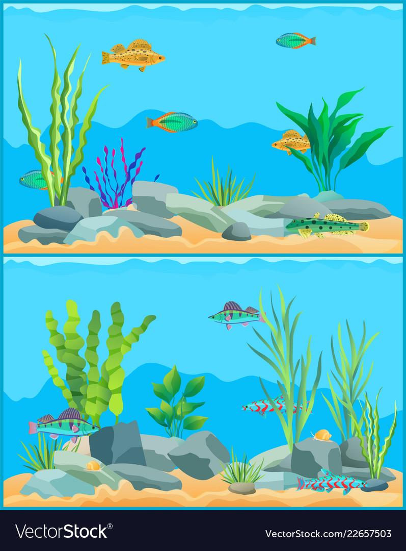 Colorful Cartoon Aquarium Fishes Set Promo Poster