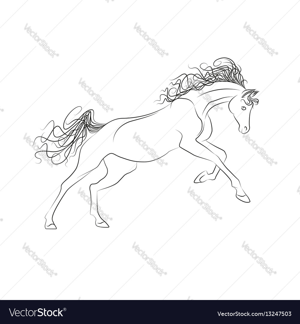 Outline drawing horses the horse gallops vector image