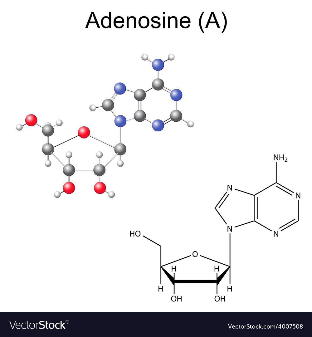Chemical formula and model of adenosine vector image