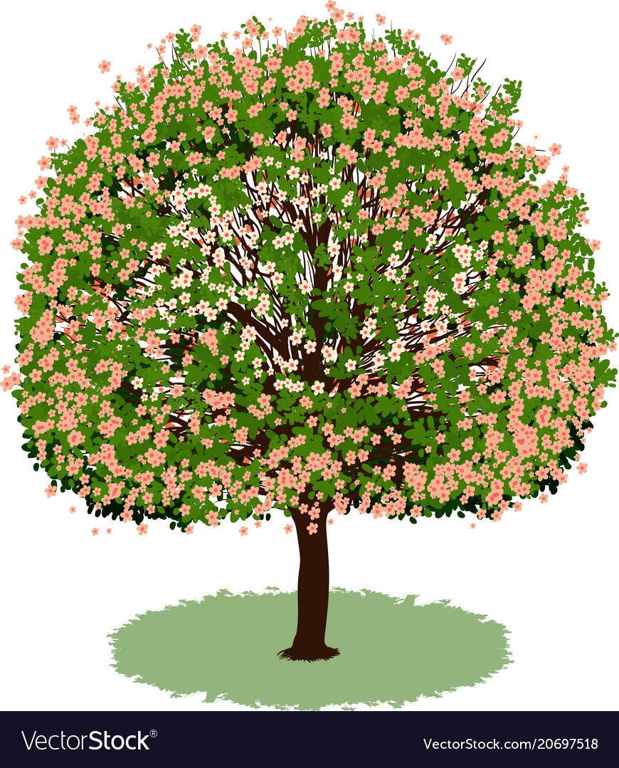 Beautiful Tree With Flowers Royalty Free Vector Image