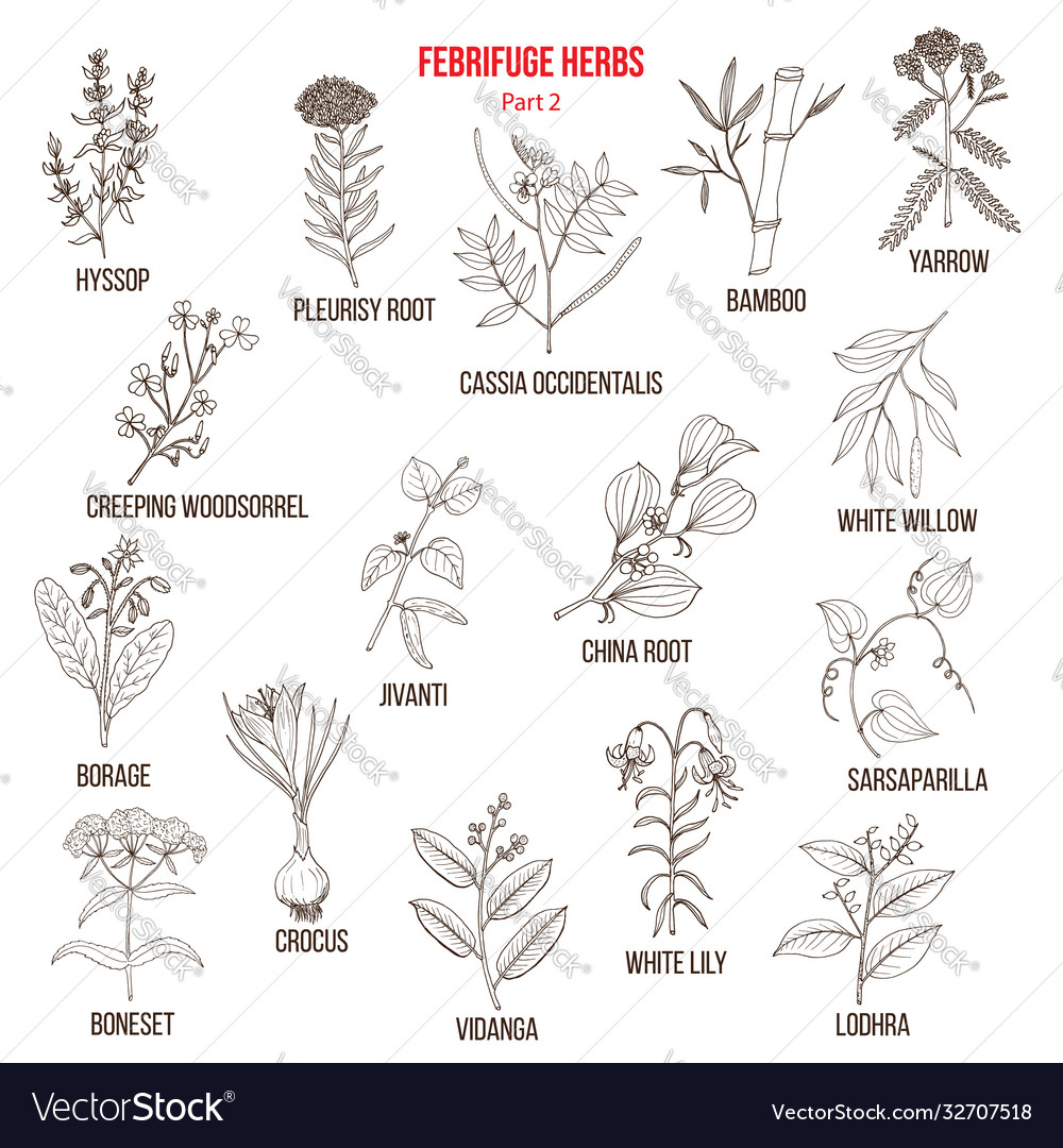 Febrifuge herbs collection part 2