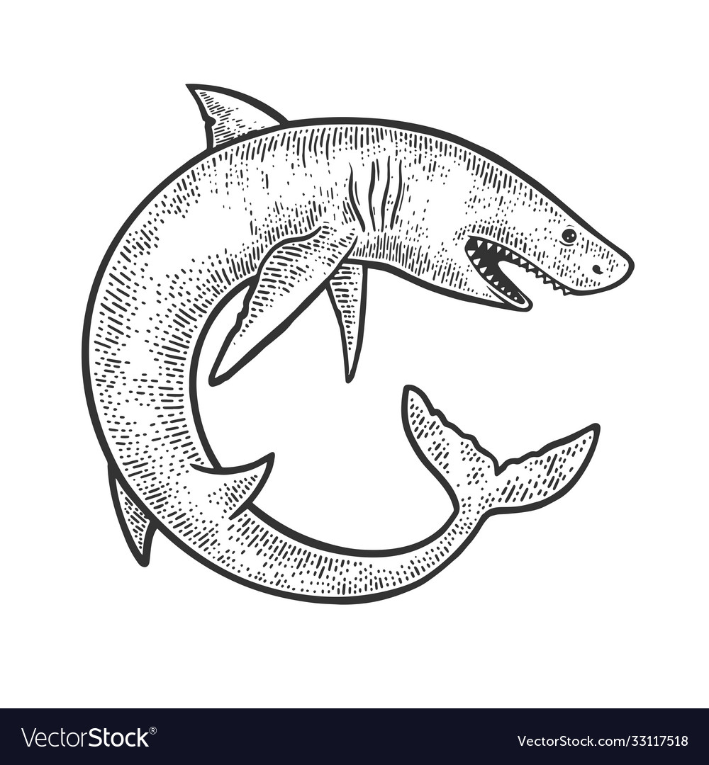 Shark rolled in circle sketch