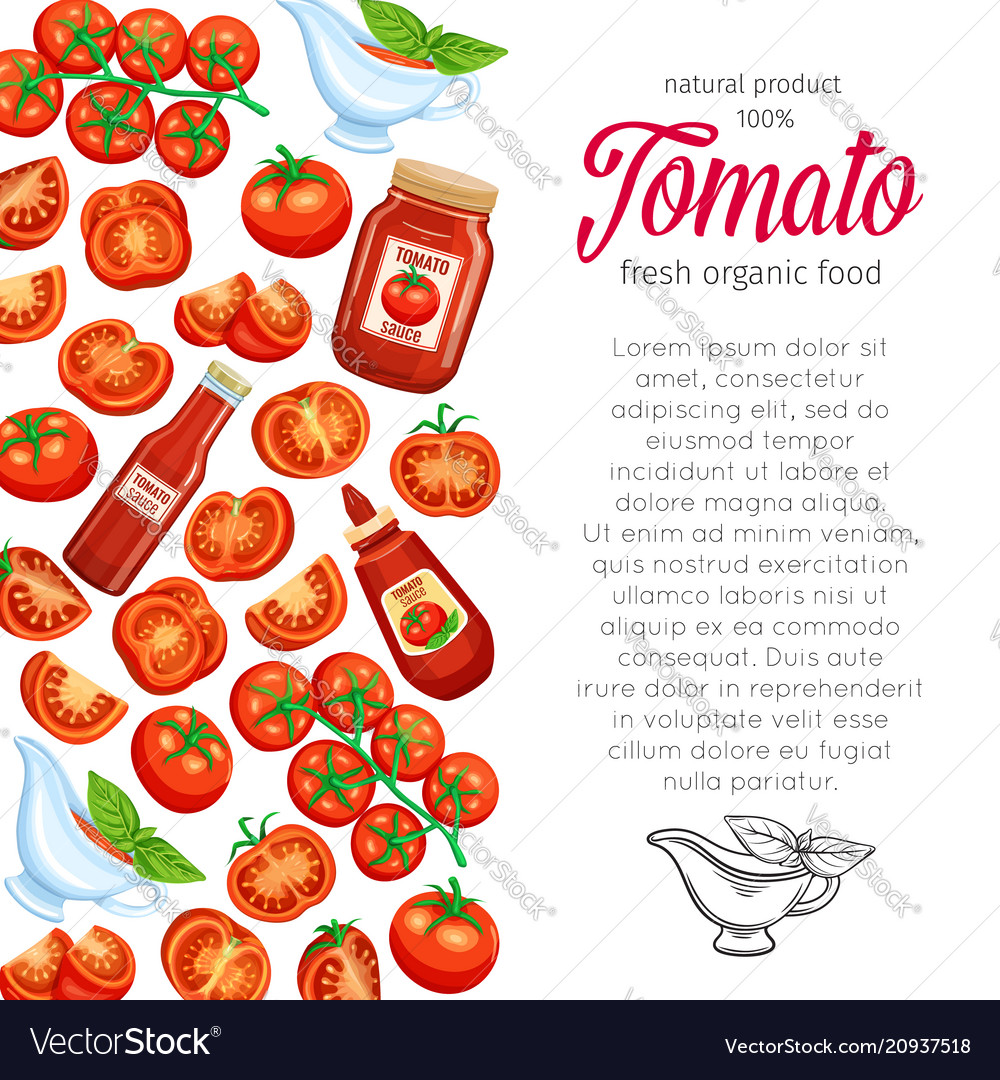 template with red tomato royalty free vector image