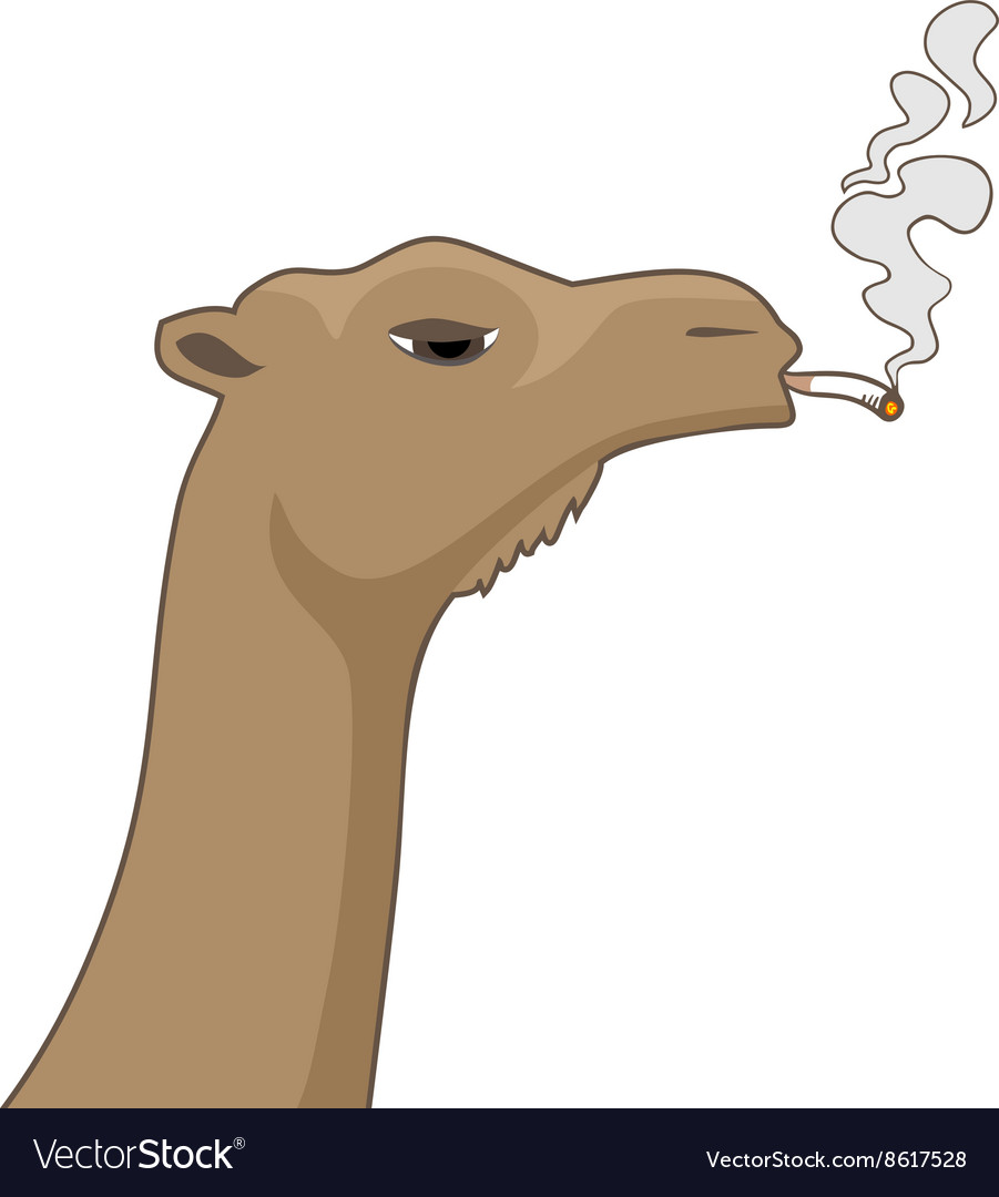 Animal with cigar vector image