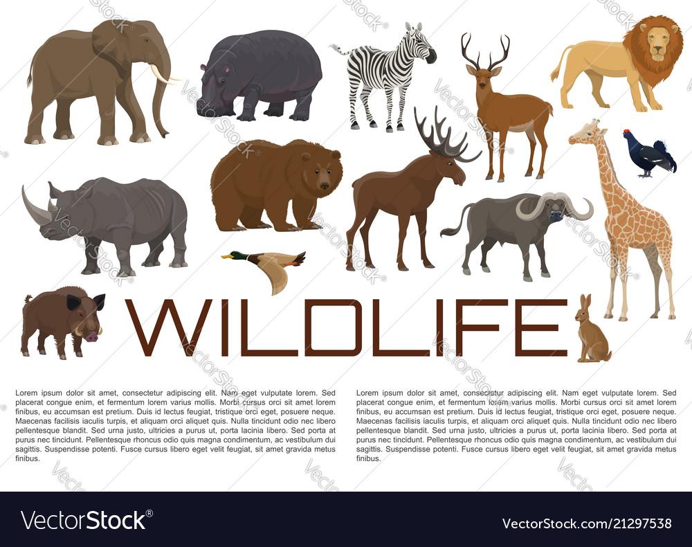 Wildlife poster of wild animals