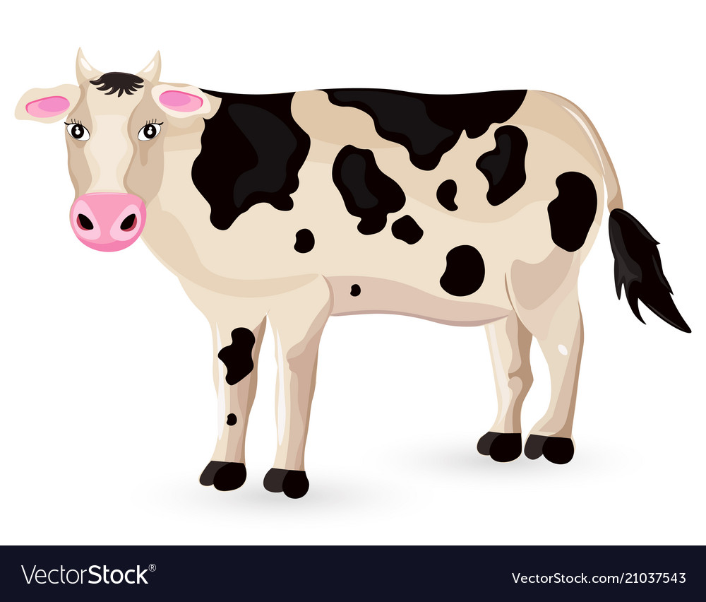 Cow isolated on white cartoon character
