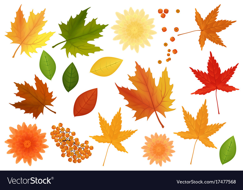 Big set of realistic leaves and flowers vector image