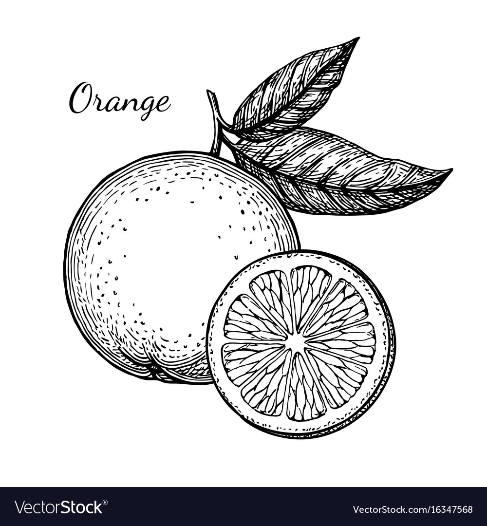 Orange Sketch Images - Reverse Search