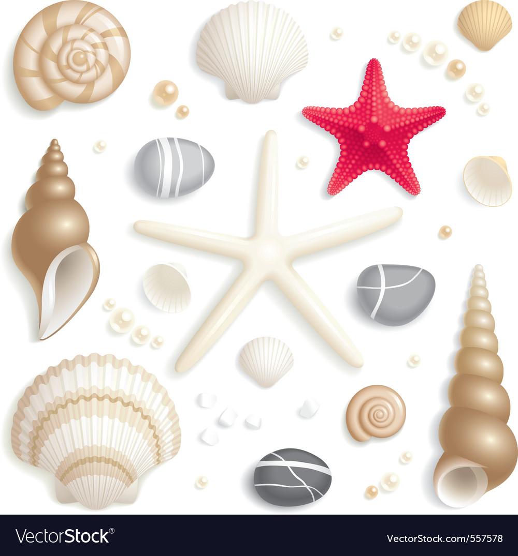 Seashell set