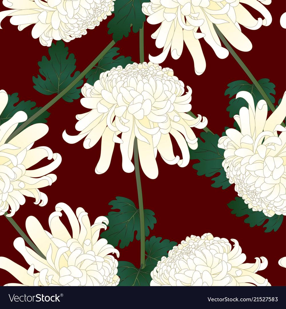 White chrysanthemum flower on red background vector image mightylinksfo