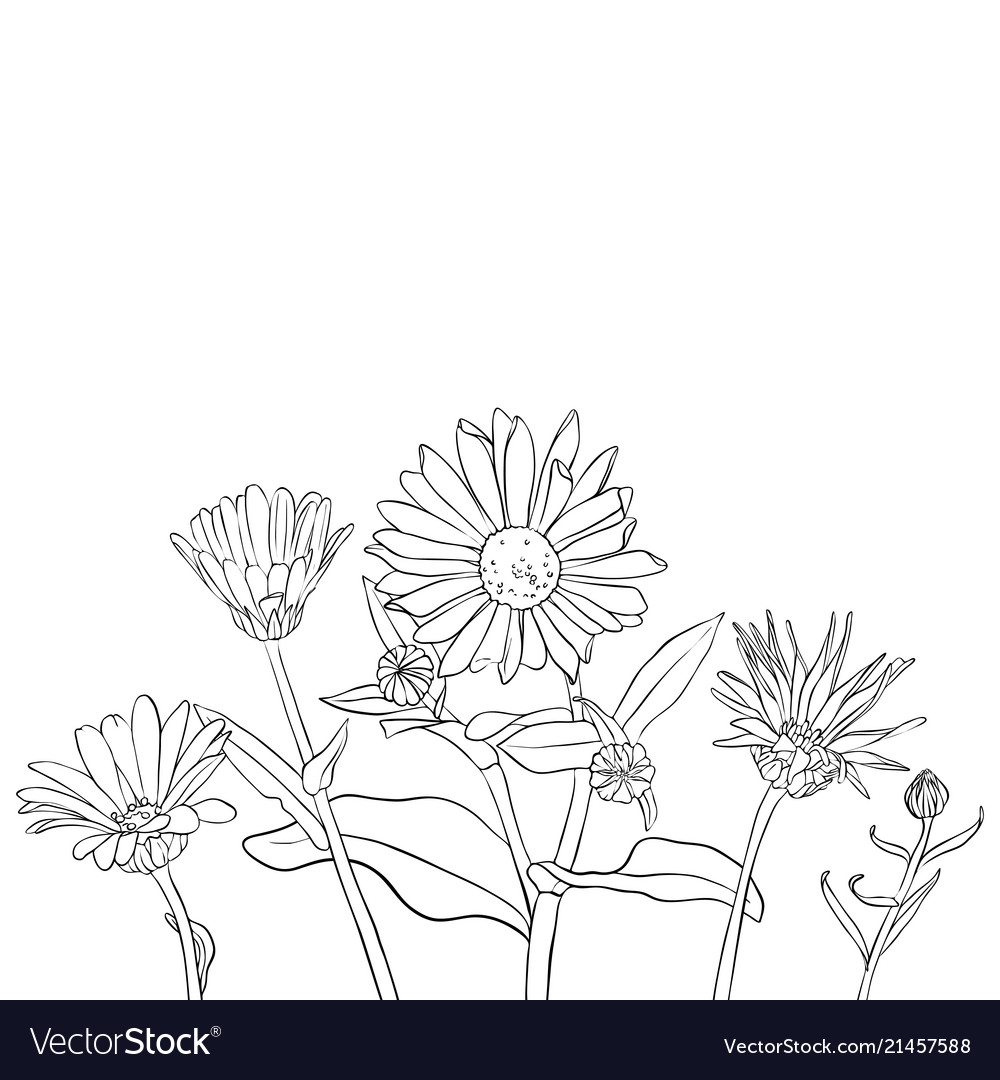 Drawing daisy flowers royalty free vector image drawing daisy flowers vector image izmirmasajfo
