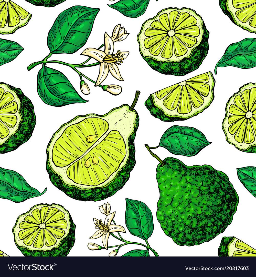 Bergamot seamless pattern drawing