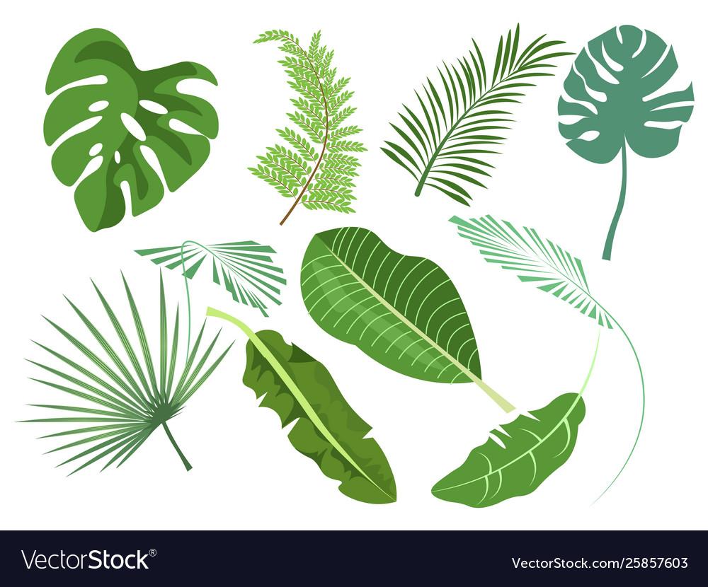 Leaves set various plants