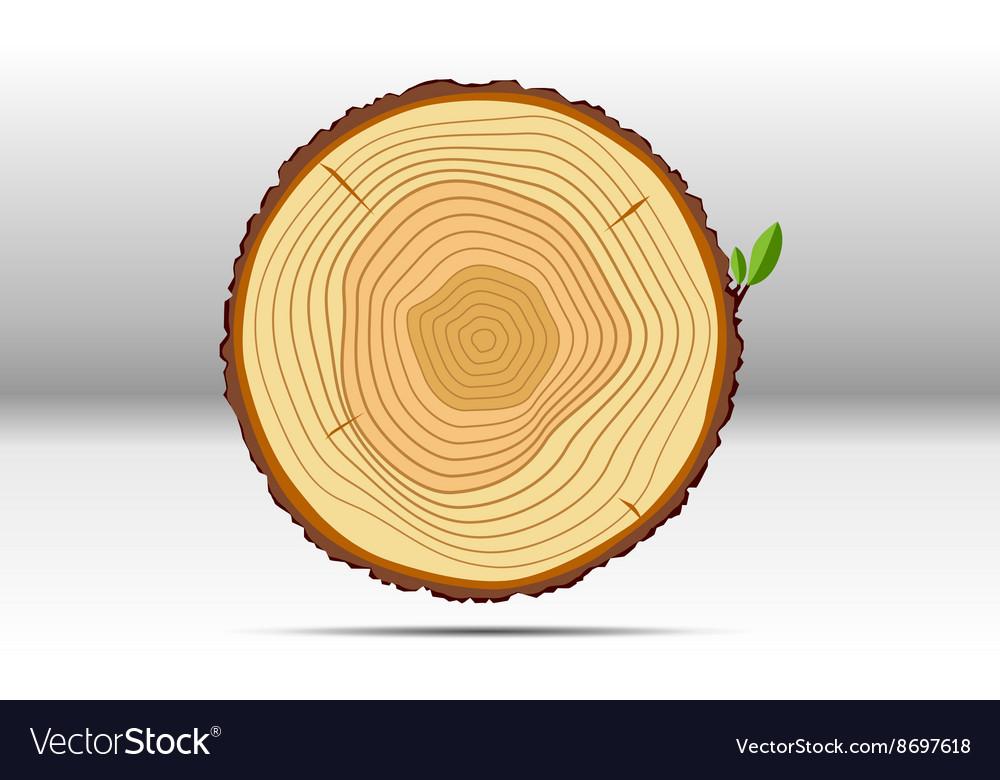 Tree growth rings wood