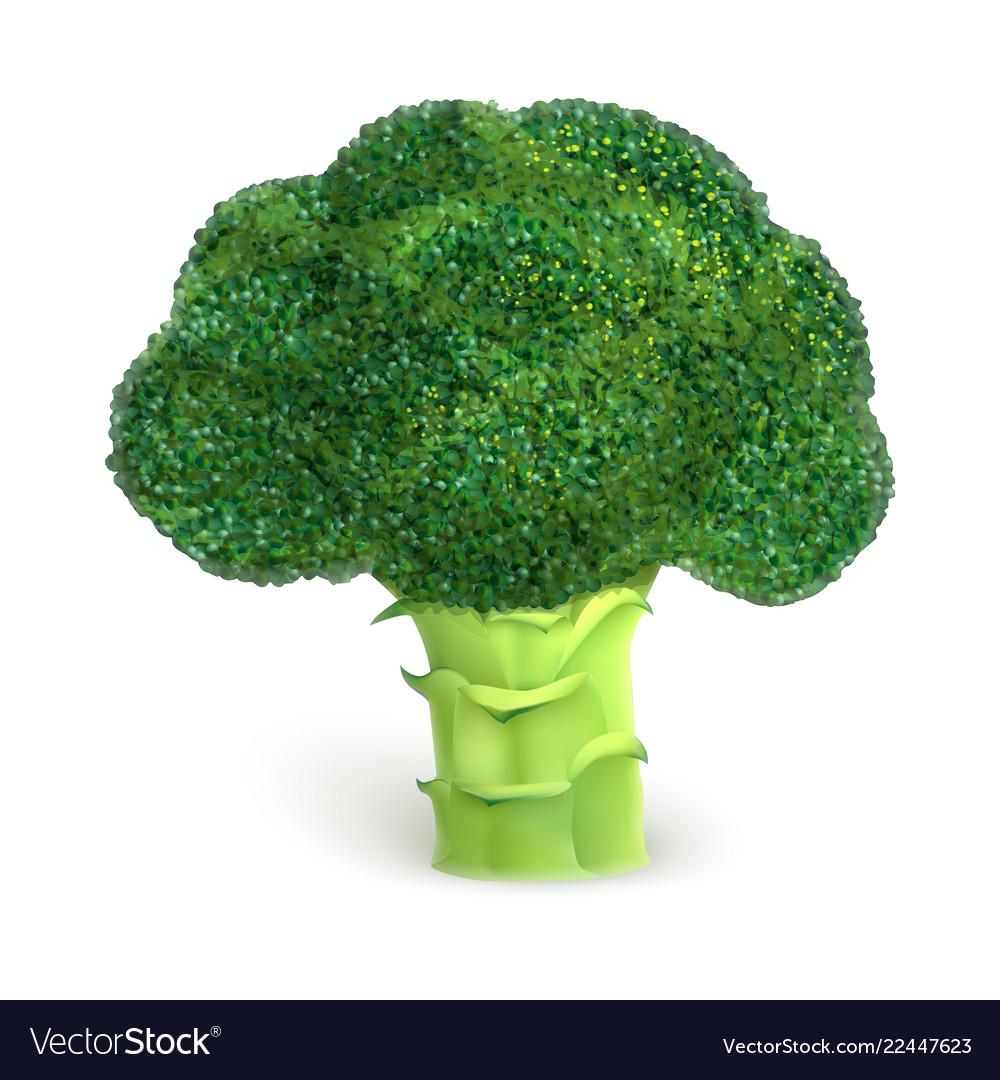 Broccoli icon realistic style