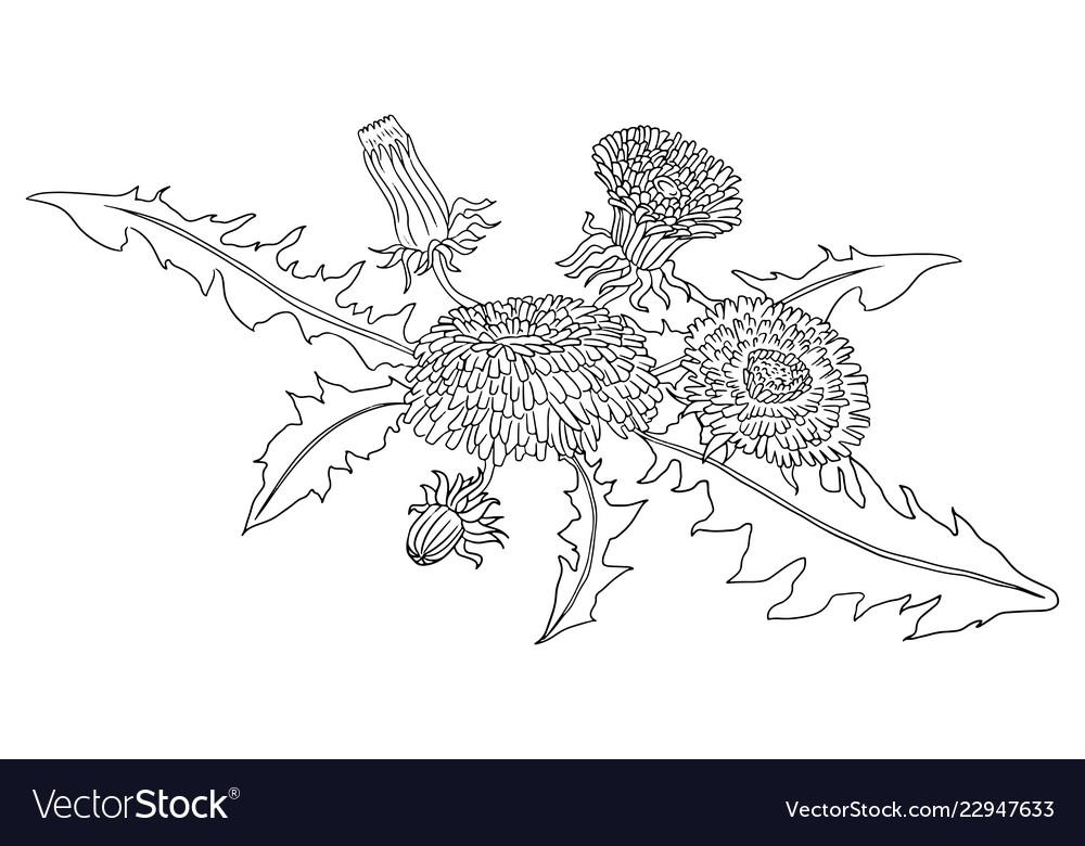 Dandelions doodle