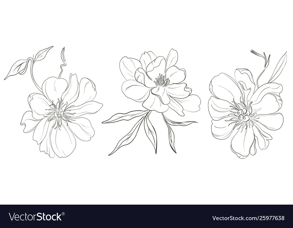 Hand-drawn black white peony flowers drawings