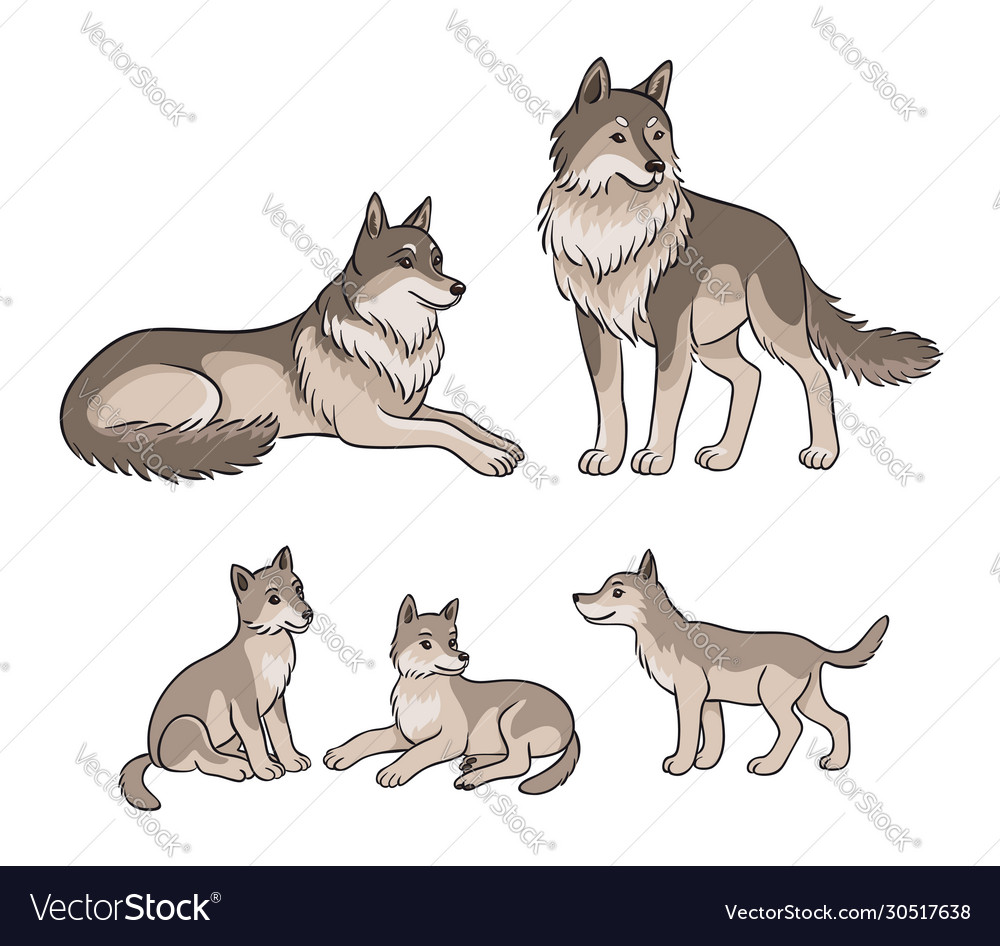 Wolves family - parents and three cubs