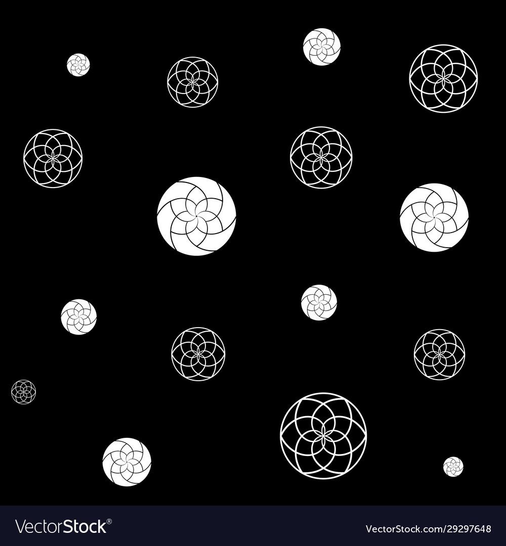White geometric chrysanthemums flowers on black