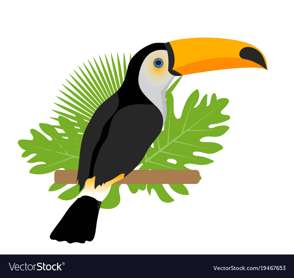 Toco toucan icon is a flat cartoon style exotic