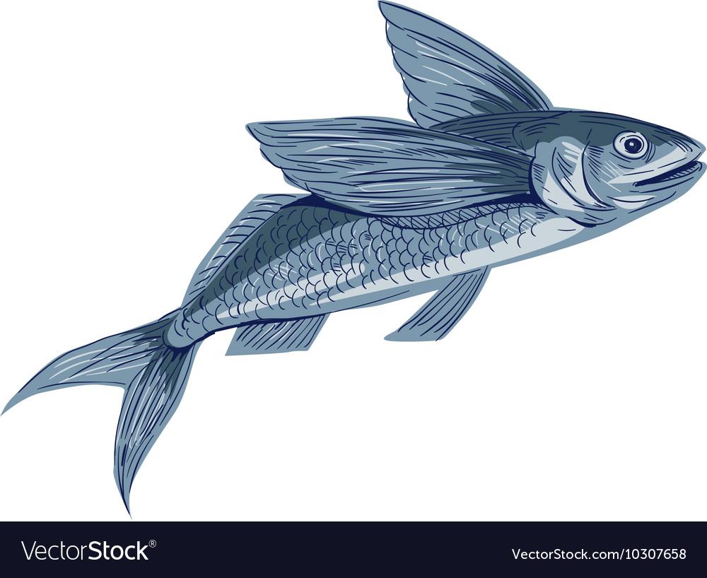 Flying Fish Drawing vector image