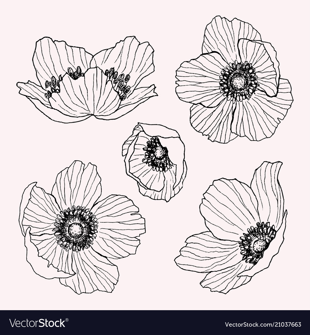 Anemone flower drawing set isolated wild