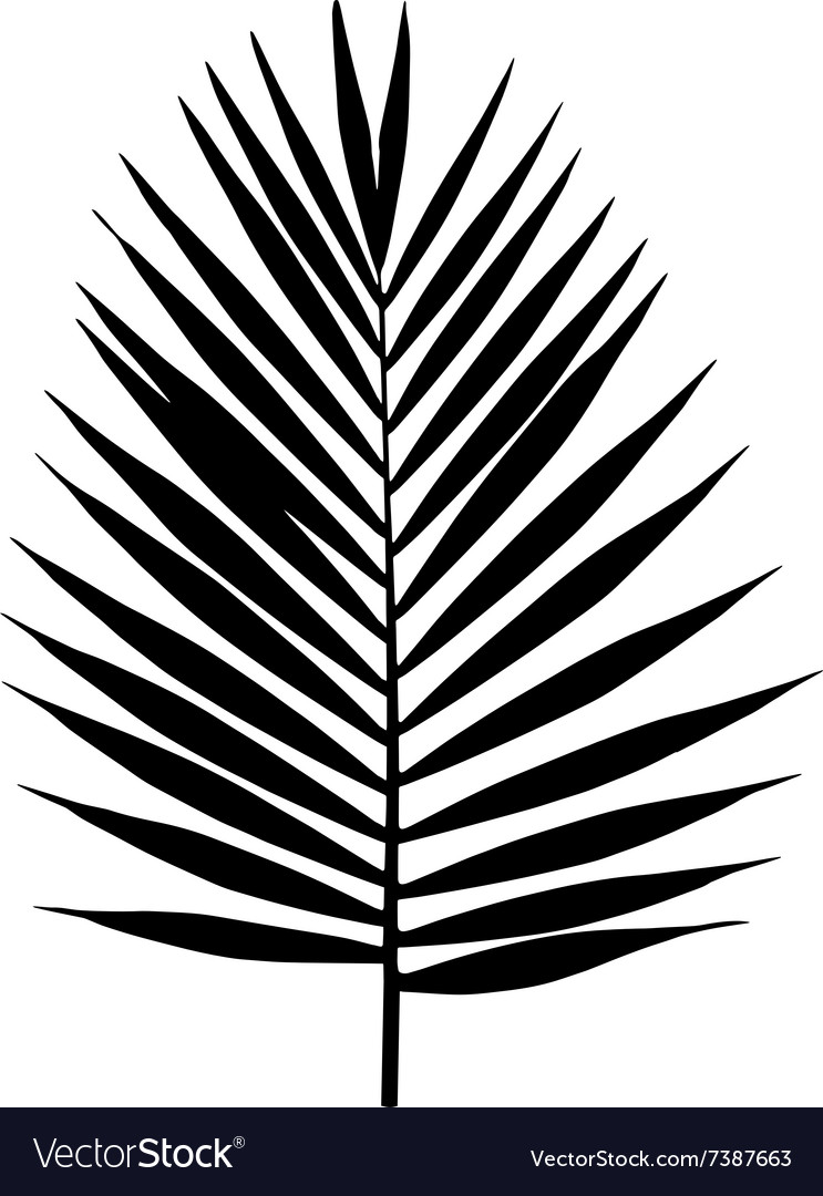 palm leaf silhouette tropical leaves royalty free vector