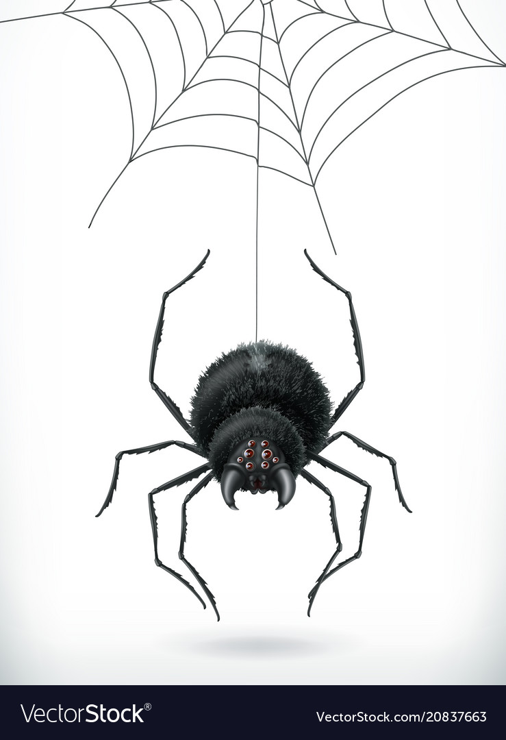 Spider happy halloween 3d icon
