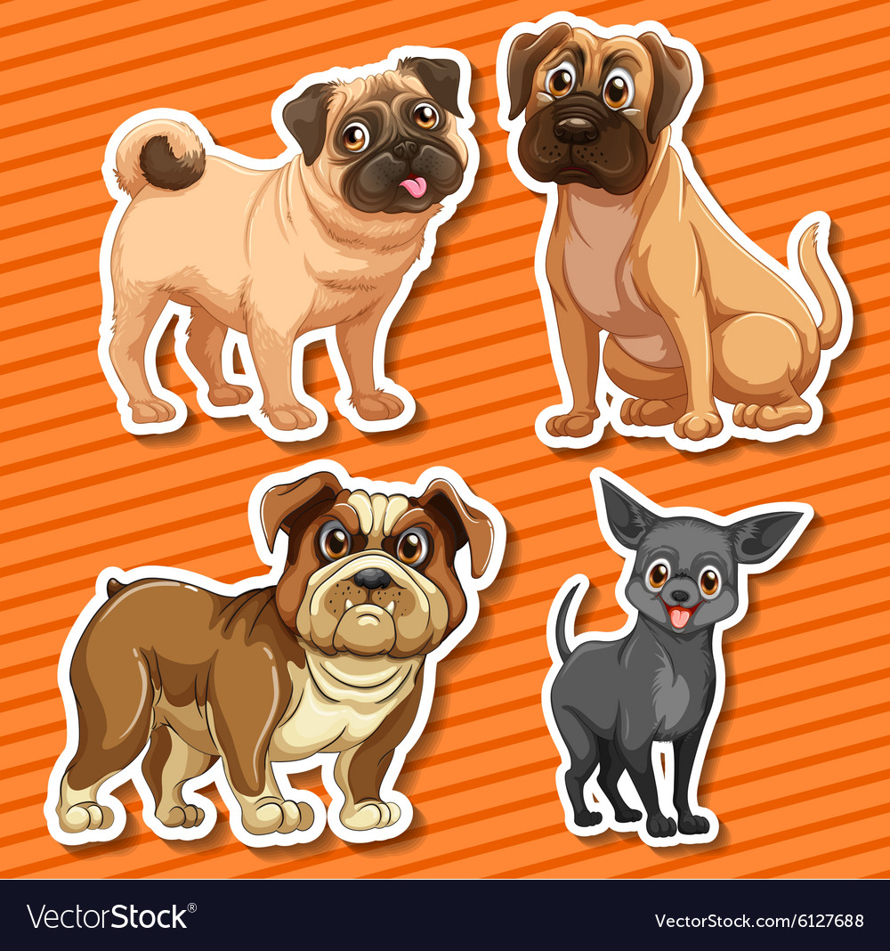 Small breeds dogs on orange background