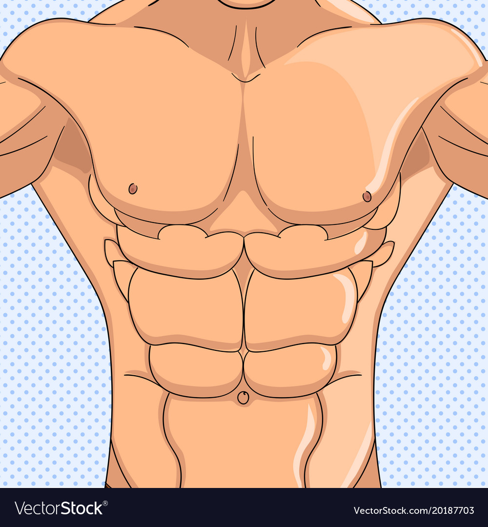 Bodybuilder Anatomy Of The Abdominal Muscles Man Vector Image