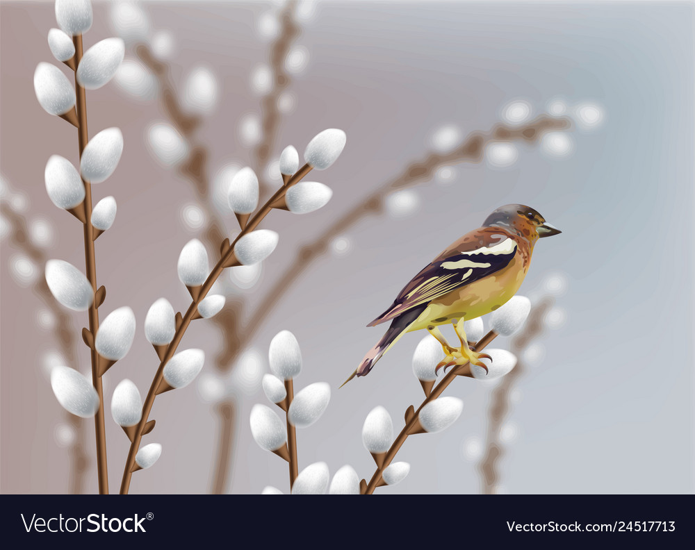 Beautiful sparrow and willow branches