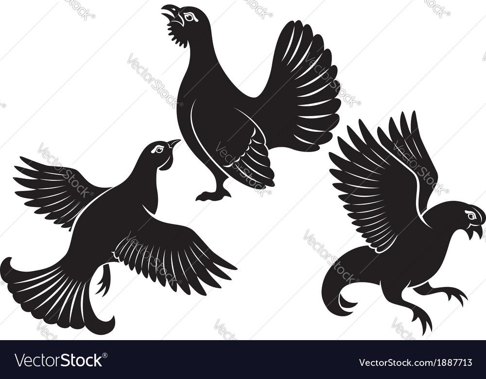 Bird grouse
