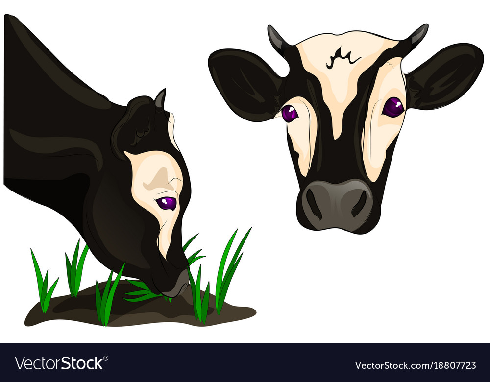 Cow head eating grass vector image