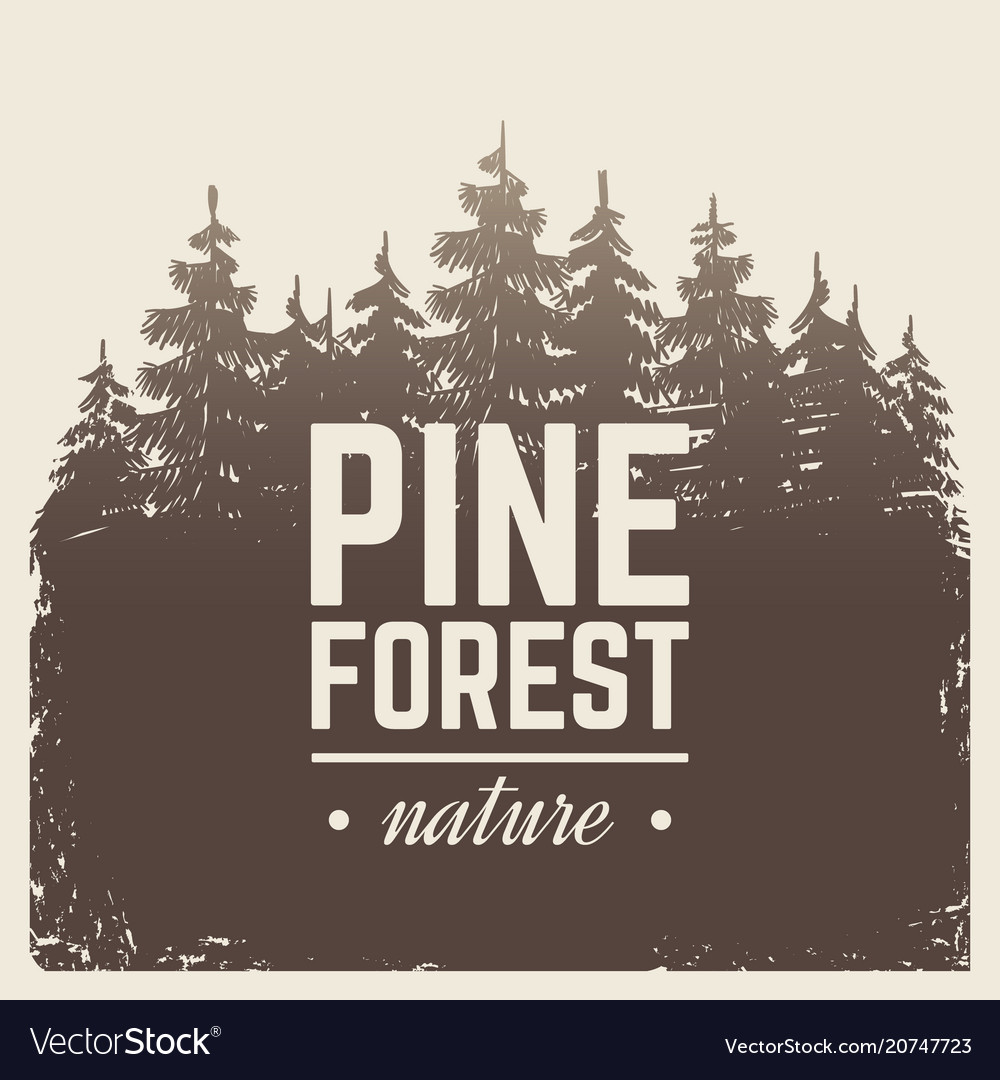 Sketch vintage nature pine and fir tree forest in