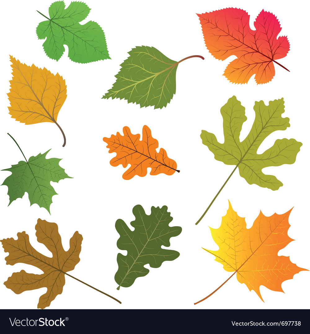 Leaves Of Trees Royalty Free Vector Image Vectorstock