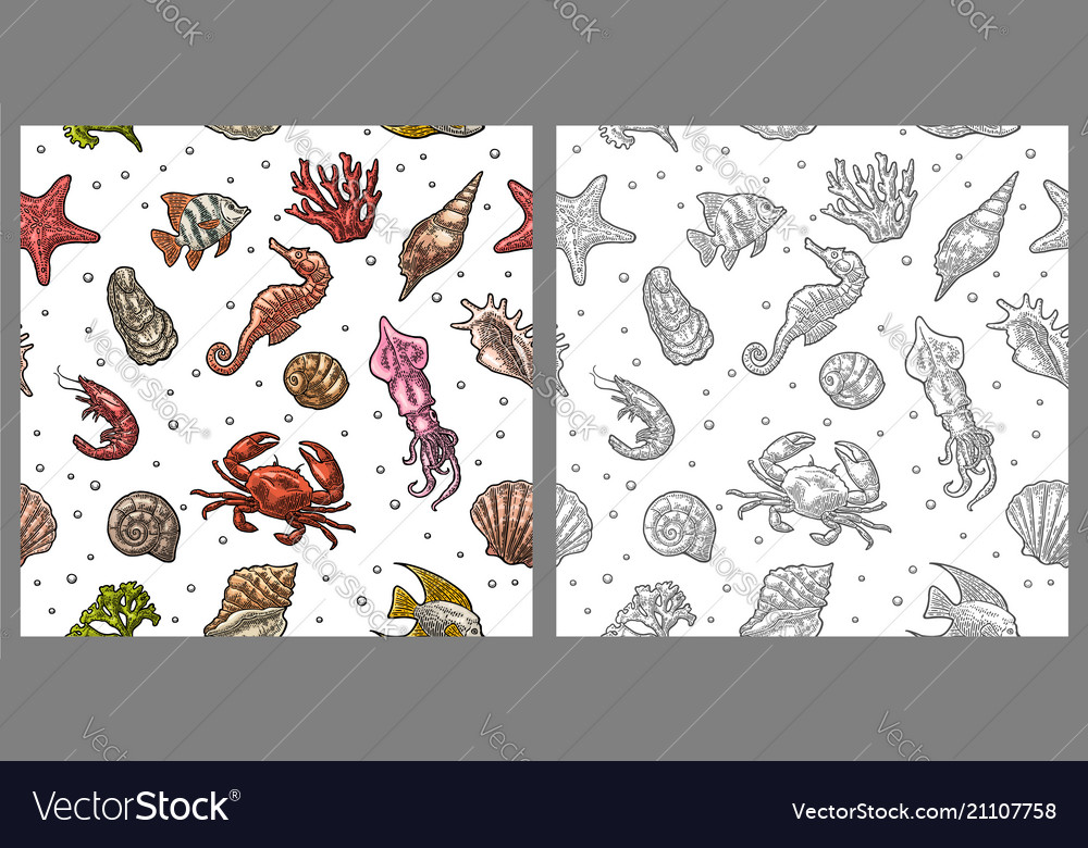 Seamless pattern sea shell coral cuttlefish
